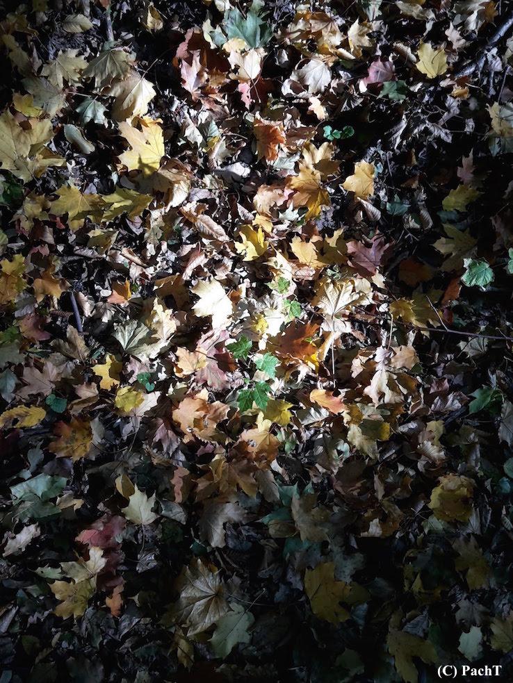 Herbst unten