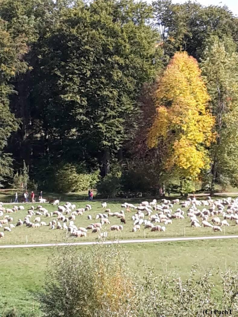 Weimar Ilmpark HerbstSpaziergang