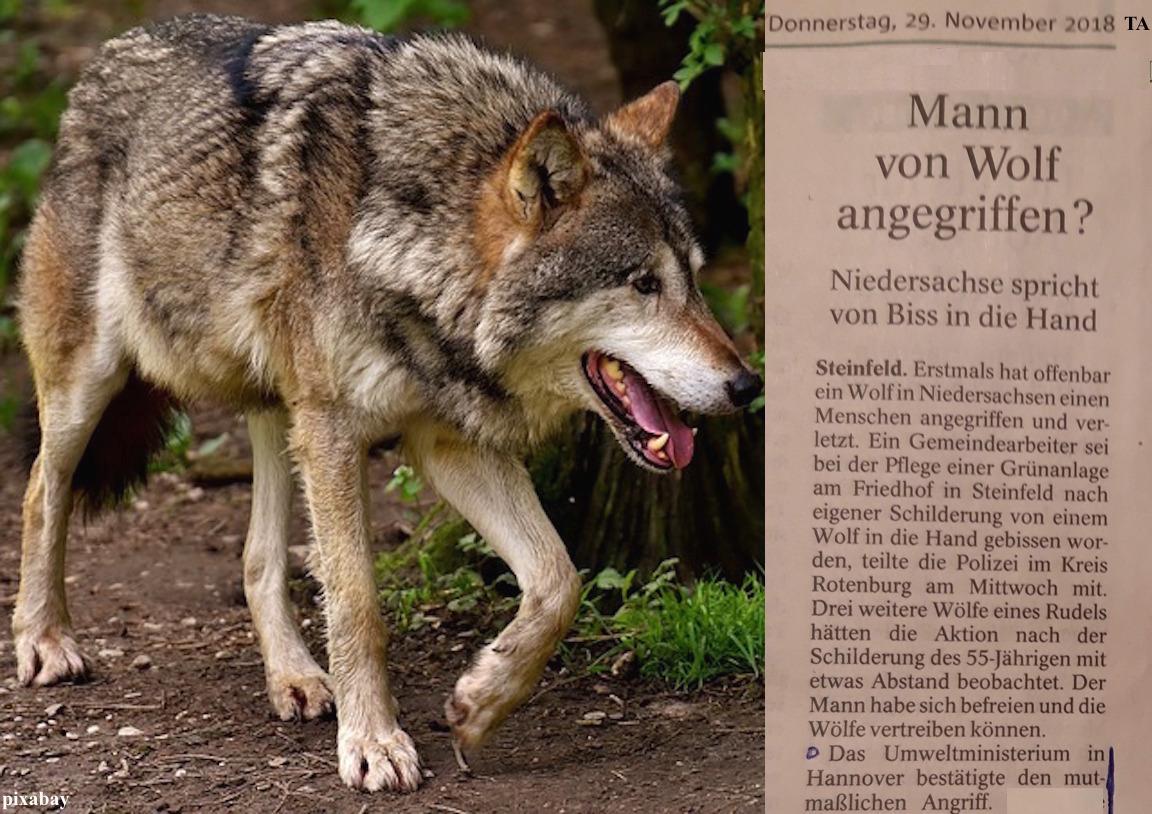 SchlagZeile Wolf _ war mal ... ist wieder 29.11.18