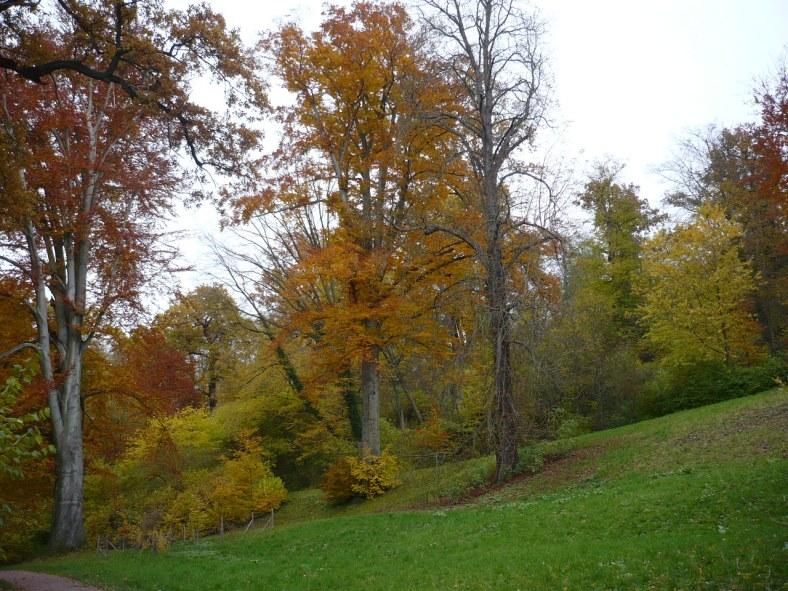 Weimar-Tiefurt 2 Park Herbst