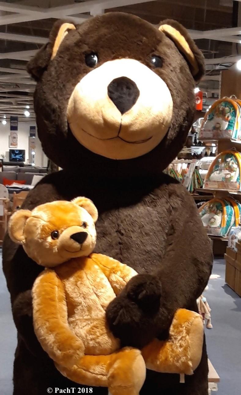 Teddy und Bär