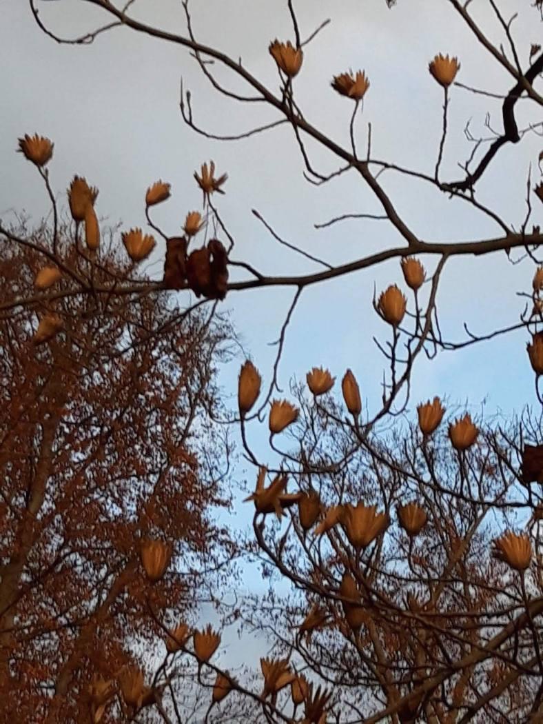 tulpenbaum 3 Spätherbst we-ilmpark