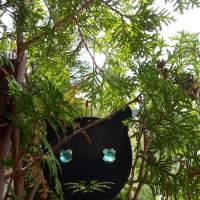 24.10.21 #Katze mit #Launen #