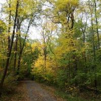 24.10.20 Aus dem #Herbstwald in die #Stadt (2)