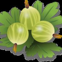 22.10.20 #Lieblingsfrucht der #Igel ... Eine #Quizfrage ! ... #